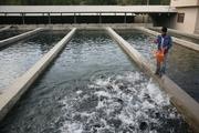 صادرات ۲۰۰ تن ماهی از لرستان به کشورهای همسایه