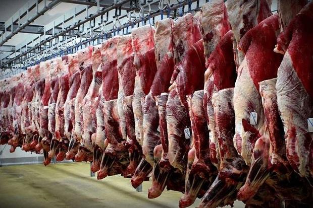 توزیع 10 تن گوشت وارداتی در قزوین آغاز شد