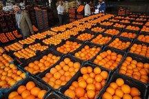 تدارک30 هزار تن پرتقال شمال برای شب عید در کشور