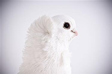 پرندگان در آتلیه عکاسی + تصاویر