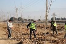 پنج هزار اصله نهال در منطقه 9 کرج کاشته شد