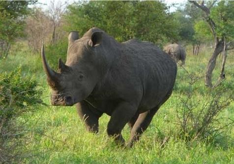 حالِ حیاتوحش آفریقا خوب نیست
