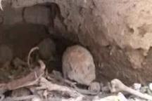 یک گور دسته جمعی قدیمی در بافق یزد کشف شد