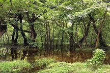 طبیعت جنگل آبی روستای گردشگری گیلده/ فیلم