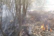 2500هزار متر مربع از منابع طبیعی مختار یاسوج طعمه حریق شد