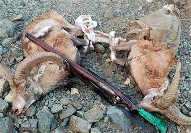 دستگیری ۶۲ شکارچی متخلف در پیرانشهر