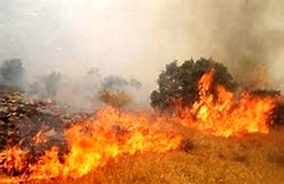 آتشسوزی کوههای الهک ایذه عمدی بود  عوامل حادثه دستگیر شدند