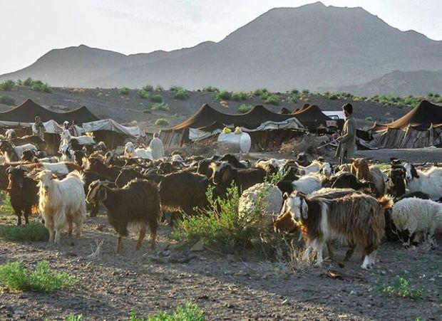 ۳ میلیارد تومان اعتبار به عشایر سیستان و بلوچستان تخصیص یافت