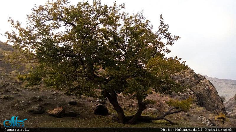 طبیعت پاییزی درکه