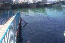 آلودگی آبراه دریایی بندرگناوه به مواد نفتی