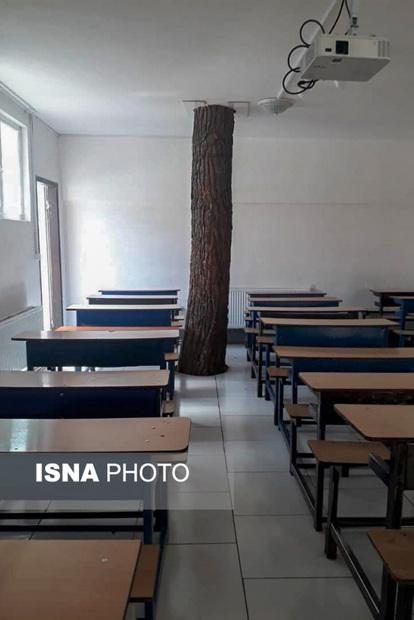 درختی که همپای دانش آموزان درس میخواند