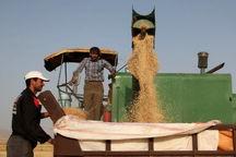 ۲۲ هزار تن گندم مازاد برنیاز کشاورزان شاهیندژی خریداری شد