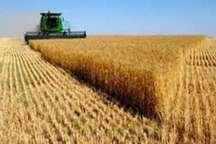 مراکز خرید محصولات کشاورزی بیله سوار خرداد ماه فعال  می شوند