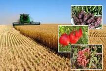 تغییر الگوی مدیریتی به افزایش تولیدات کشاورزی در اردبیل منجر شده است