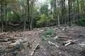 اعتراض اهالی یک روستا، مانع قطع درختان در کلاردشت شد