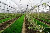 گناوه برای ایجاد شهرک کشاورزی مناسب است