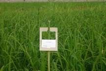 افزایش 10 هزار هکتاری مبارزه بیولوژیک در زمین های کشاورزی مازندران