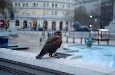 استرس زندگی شهری طنین آواز پرندگان را تغییر داده!