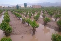 سیل به 10هزار هکتار از زمین های کشاورزی بروجرد خسارت زد