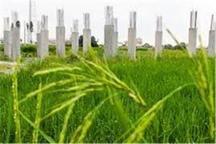 افزایش 50 درصدی پوشش حفاظتی زمین های کشاورزی در دولت یازدهم