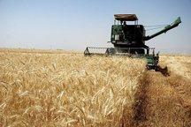 شرط خرید گندم از کشاورزان ثبت نام در سامانه است