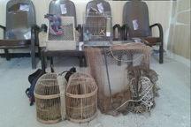 شکارچیان غیرمجاز در ثلاث باباجانی دستگیر شدند