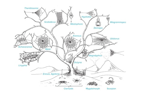 یافته های جدید و حیرت انگیز دانشمندان درباره عنکبوت ها