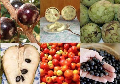 پذیرایی از المپیکیها با ۴۰ نوع میوه برزیلی + تصاویر