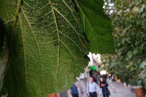 حضور سفیدبالکها در تهران ۴ ساله شد