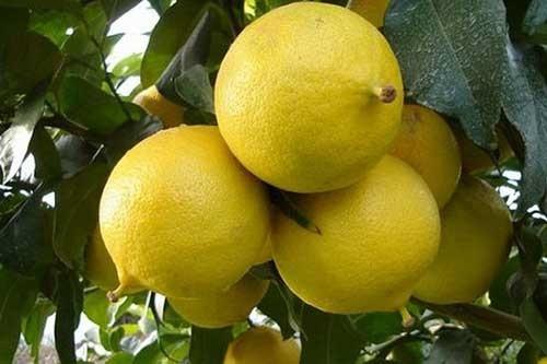 میوه ای برای تقویت اعصاب