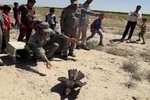 هشت گونه پرنده شکاری تیمار شده در تالاب میقان اراک رها سازی شد
