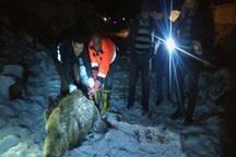 محیط بانان یک قلاده خوک را در مشگین شهر نجات دادند