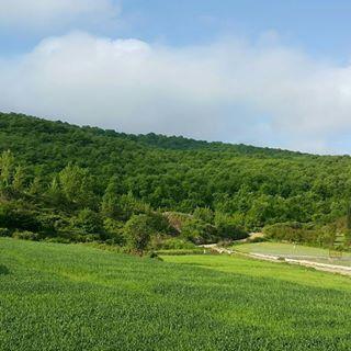 سنگ اداره ثبت جلوی پای بازگشت اراضی حاشیه جنگل قائمشهر به کشاورزی