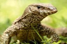 آزار دهندگان گونههای نادر طبیعت  به دستگاه قضایی معرفی میشوند