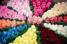 تولید گل شاخه بریده توسط 37 شرکت دانشبنیان خراسان رضوی