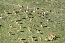 تورهای گردشگری حیات وحش در قزوین راه اندازی می شود
