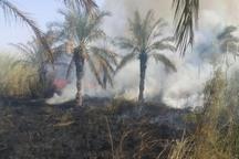 آتش سوزی نخلستان های دشتستان مهار شد