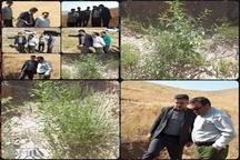 بازدید استاندار لرستان از پروژه بادام کاری  منطقه رازان خرم آباد