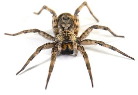 ردپای عنکبوت در گجت های پوشیدنی آینده!