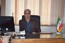 برداشت کلزا در 350 هکتار از مزارع کامیاران
