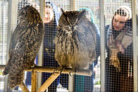 دو تخلف بزرگ باغ پرندگان تهران