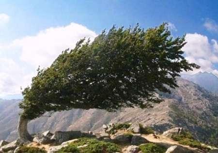 سرعت وزش باد طی 24 ساعت گذشته در زنجان به 70 کیلومتر بر ساعت رسید