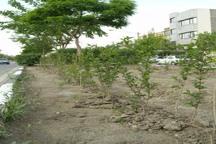 محکومان 30 پرونده در گلستان درخت می کارند