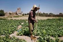 بانکها به مدت یک ماه حق مطالبه دیرکرد وام کشاورزان را ندارند