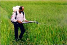 مبارزه با علف های هرز در گندمزار های خراسان شمالی کاهش یافت