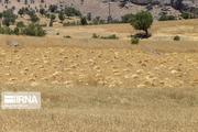 ۷۰ میلیارد ریال تسهیلات به کشاورزان سمیرم پرداخت شد
