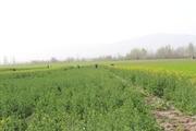طرح یکپارچه سازی مزارع کشاورزی در مرند اجرا می شود