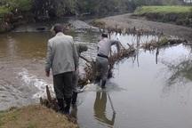 سدهای صید ماهی از رودخانه های تالش جمع آوری شد