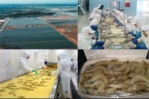مشکلات تاخیر تولید بچه میگو در بوشهر برطرف شد