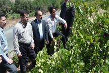 مدیرعامل سازمان تعاون روستایی: ایجاد صنایع تبدیلی در بخش کشاورزی استان کردستان در اولویت است
